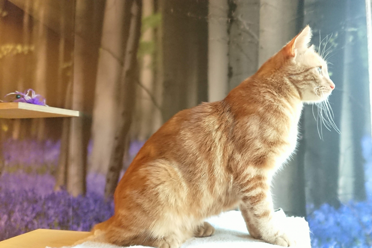 Orange cat at boarding cattery